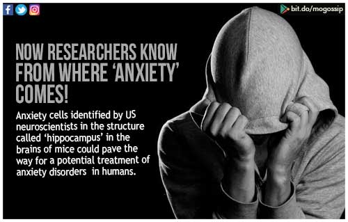 Researchers Discover Anxiety Cells In >> Researchers Discover Anxiety Cells In Brain